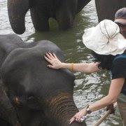 Elephants  Aliance Paradigm Personal Corporate DevelopmentChangeEfficency  Modules